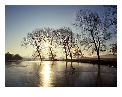 Richmond Park, UK winter by David Usill at Atelier Editions