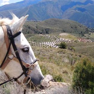 Caballo Blanco in La Chaparra, Lanjaron, Granada