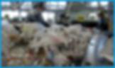 藤沢市資源循環協同組合(ふじさわしげんくみあい)の手選別ありきのリサイクル