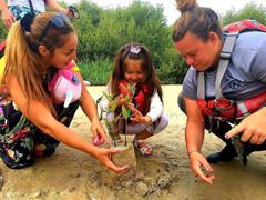 Planting mangrove saplings in the Al Zorah Nature Reserve
