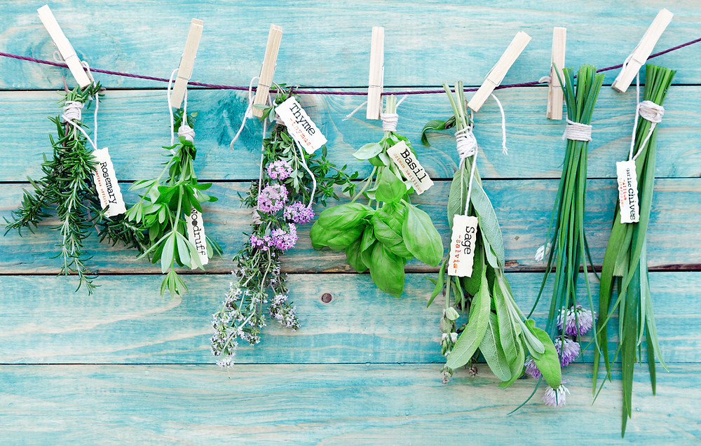 Hanging bunches of herbs