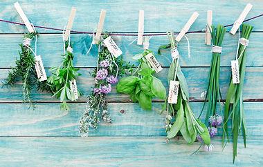 Herbes suspendus