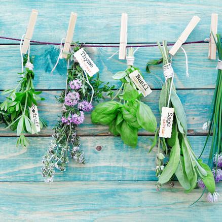 A Little Bit About Companion Herbs