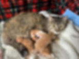 Mom & Kittens.jpg