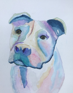 Colorful Pittie