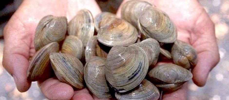 Oregon Clam Season 101: Ask Manzanita Beach Life