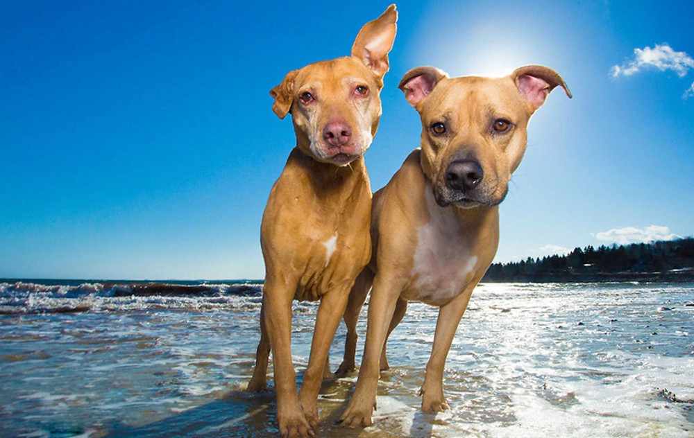 Oregon Coast Pet Friendly Lodging
