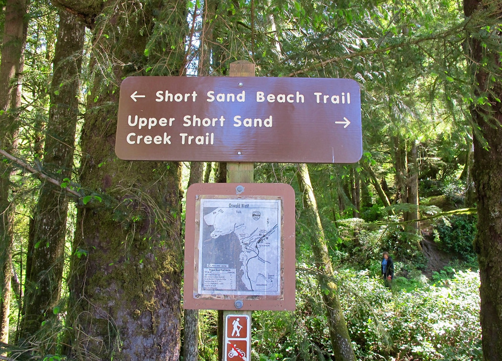 Oswald West State Park is a fabulous hiking destination for all.