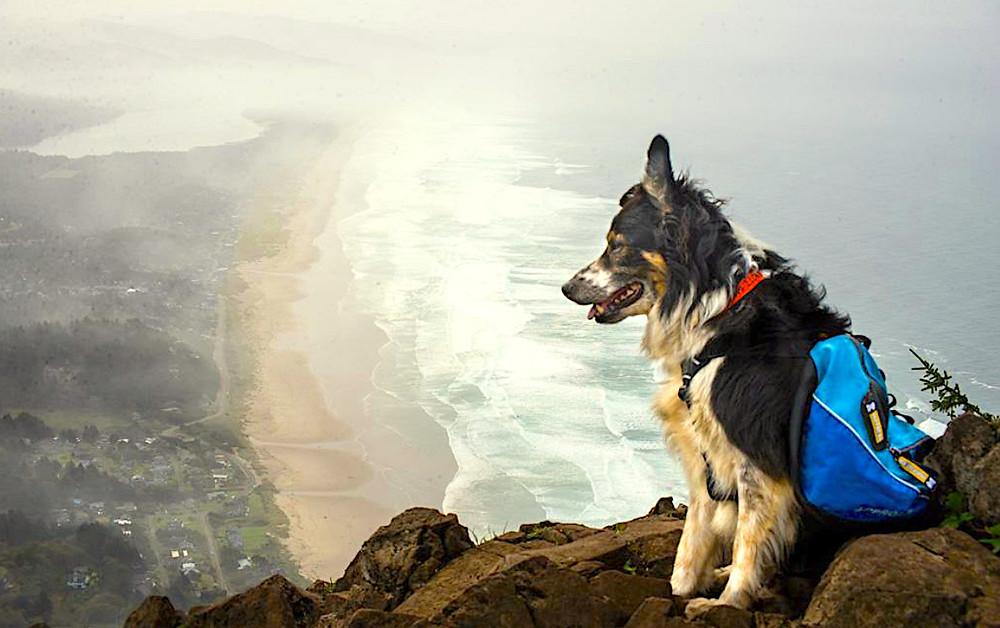 You'll find lots to do at pet friendly manzanita beach