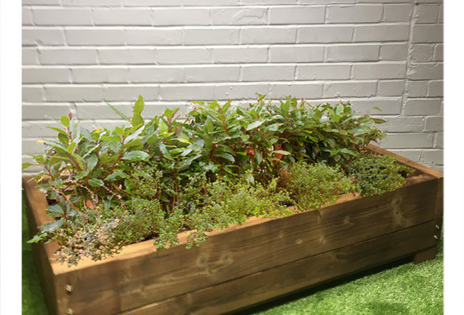 Low Planter box
