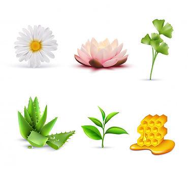 conjunto-ingredientes-cosmeticos-organic