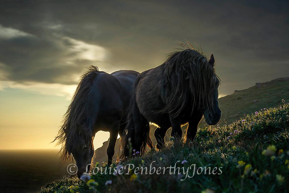Perran Ponies