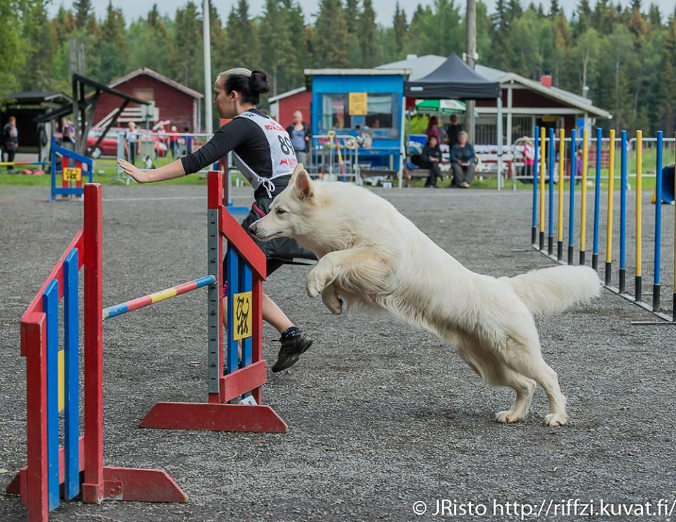 Woody hyppää viimeisissä 2-luokan kisoissaan
