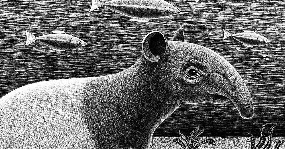 Tapir Underwater Endangered Animals