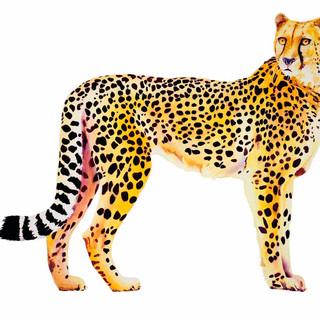 Cheetah_Watercolor