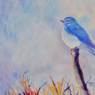 Mountain Bluebird_Watercolor