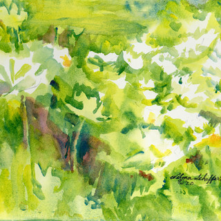 Holmes Lake Water Lilies