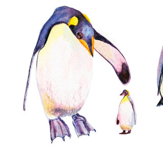 The Art of Penguins..._Watercolor