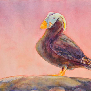 Tufted Puffin_Watercolor