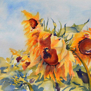 Sunflowers_W/c