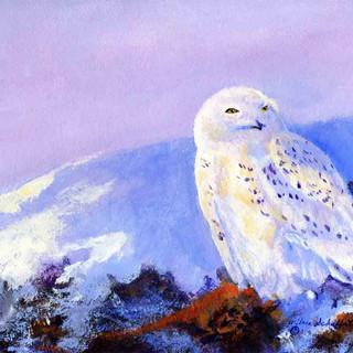 Snowy Owl_Acrylic