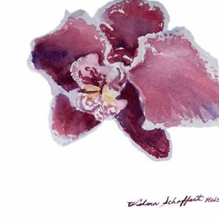 Orchid Study Plein Air_W/c