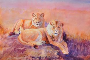 Roar Like A Lion_W/c
