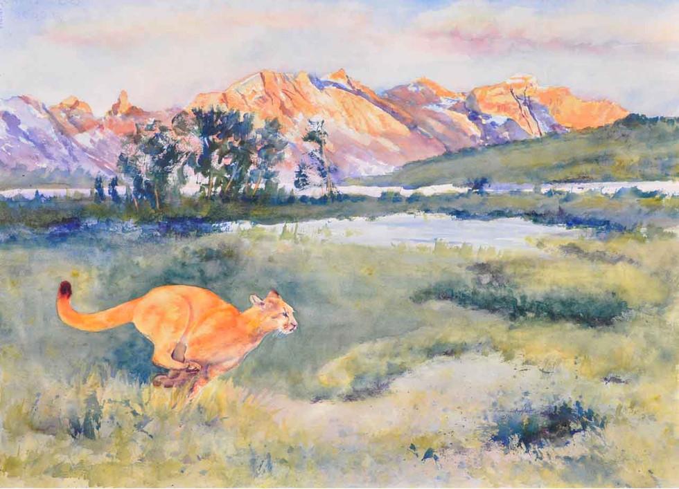 Run Cougar Run G N P_W/c