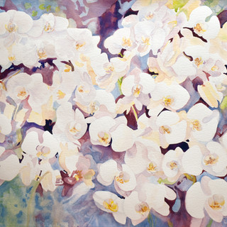 White Orchids.jpg