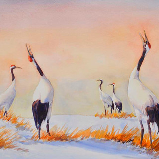 Red Crowned Cranes_Watercolor