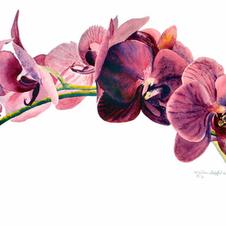 Orchids_Watercolor