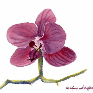 Orchid Study Two Plein Air_W/c