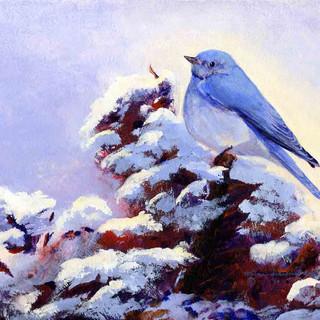Mountain Bluebird_Acrylic