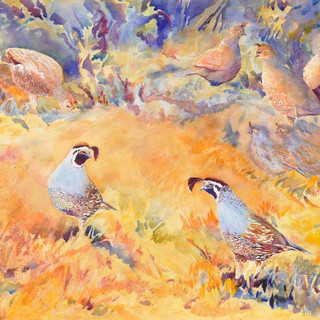 California Quail_Watercolor