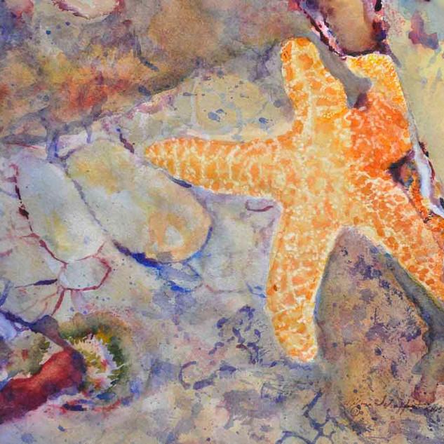 Starfish_Watercolor