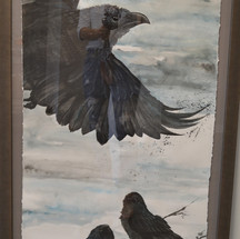 Ravens #2