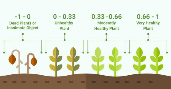 plants NDVI.jpg