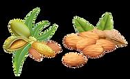 kisspng-almond-oil-vector-graphics-clip-