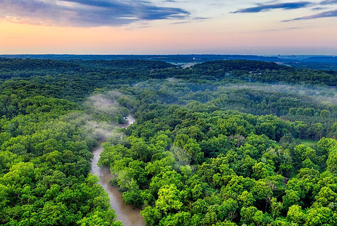 rainforest_edited.jpg