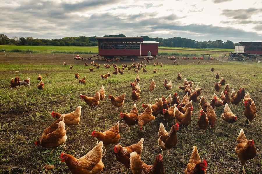 RRjr_farms_121001_020_edited.jpg