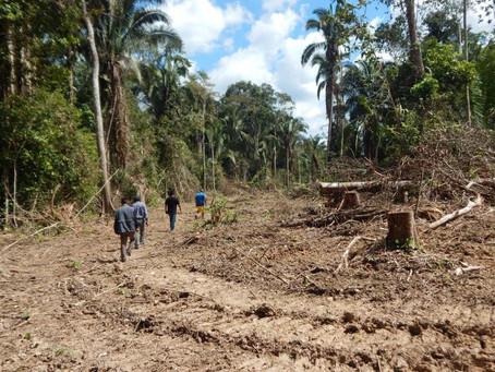 Development in the native community Santa Clara de Yarinacocha.