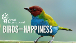 Study: Birds Are Linked to Happiness Levels
