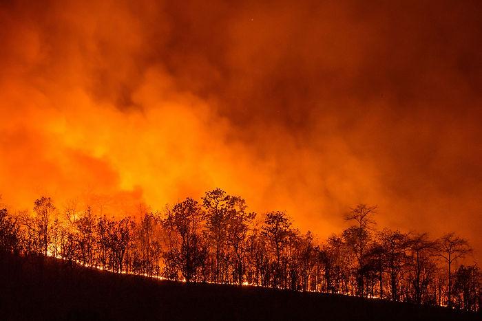 WildfireAdobe-scaled.jpeg