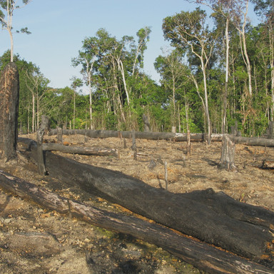 desmatamento-floresta-amazonica-45394264