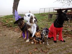 Hercules und seine Halloween Gang.jpg