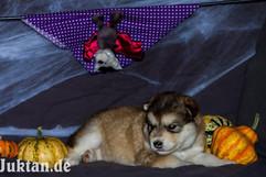 Auri the sweetest puppy.jpg