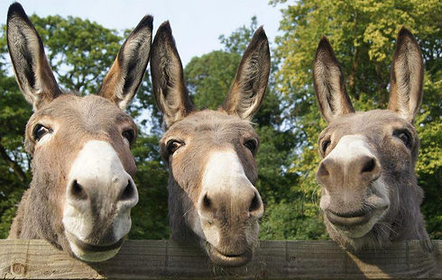 Donkeys-3-donkeys - Copy.jpg