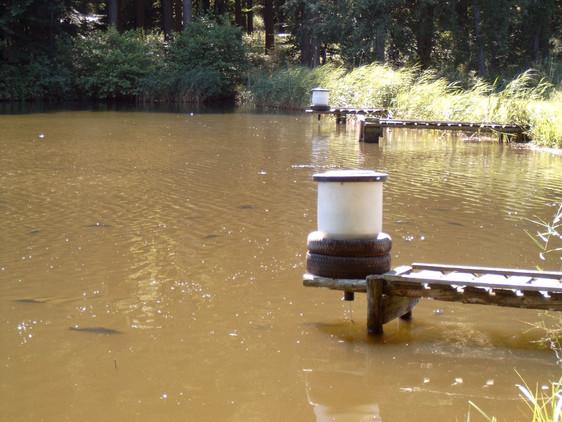 Pendelfutterautomat, wenn die Fische gegen das Pendel schwimmen fällt Futter aus dem Trog