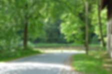 Strasse durch unseren Wald