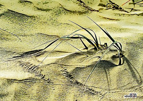 LS029 - Sand Dune